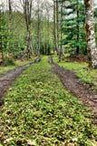 pastorals Fotografie Stock Libere da Diritti