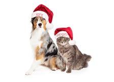 Pastore australiano Dog e Tabby Cat di festa Fotografie Stock Libere da Diritti