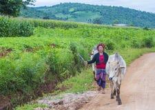 Pastore birmano nel Myanmar Fotografia Stock
