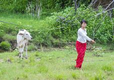 Pastore birmano nel Myanmar Immagini Stock Libere da Diritti