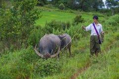 Pastore birmano nel Myanmar Immagine Stock