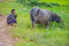 Pastore birmano nel Myanmar Immagine Stock Libera da Diritti