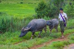 Pastore birmano nel Myanmar Fotografia Stock Libera da Diritti