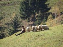 Pastore con le sue pecore Immagini Stock Libere da Diritti