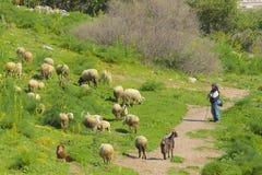 Pastore con le sue pecore, Turchia Immagini Stock