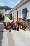 Pastore con un gregge delle capre Fotografia Stock Libera da Diritti