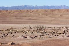 Pastore del deserto con la moltitudine di pecore Orizzonte della montagna di Snowy Fotografia Stock Libera da Diritti