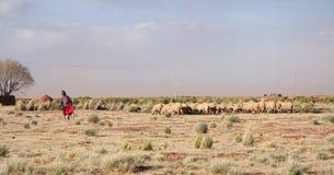 Pastore della donna anziana e moltitudine di pecore in Bolivia Fotografia Stock