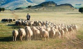 Pastore e gregge delle pecore immagine stock