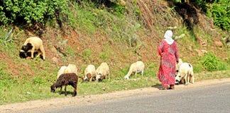 Pastore e sheeps della donna Fotografia Stock Libera da Diritti