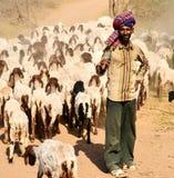 Pastore indiano Fotografie Stock Libere da Diritti