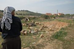 Pastore palestinese vicino allo stabilimento israeliano Fotografia Stock