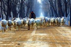 Pastore sulla strada campestre Fotografia Stock Libera da Diritti