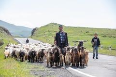Pastores armenios de las ovejas en el camino Imagen de archivo libre de regalías