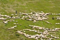 Pastores con las ovejas Foto de archivo libre de regalías