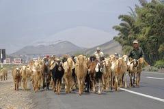 Pastores da cabra foto de stock royalty free