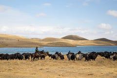Pastores de los yacs en Kirguistán meridional imagen de archivo libre de regalías