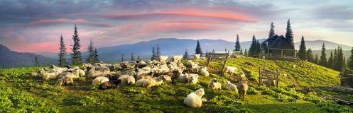 Pastores e carneiros Carpathians Fotografia de Stock Royalty Free