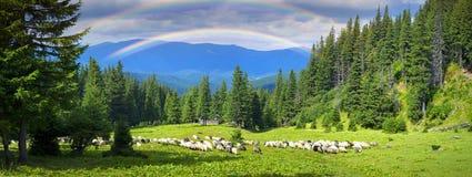 Pastores e carneiros Carpathians Imagens de Stock