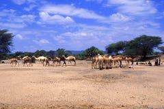 Pastores Turkana (Kenia) fotos de archivo