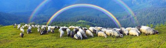 Pastori e pecore Carpathians Immagini Stock