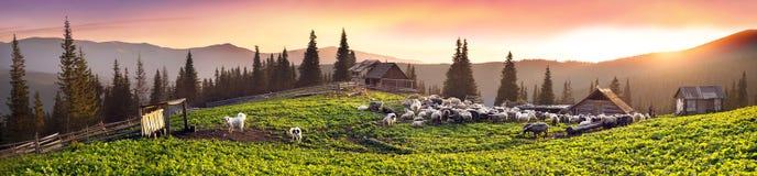 Pastori e pecore Carpathians Fotografie Stock