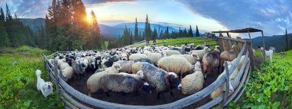 Pastori e pecore Carpathians Immagine Stock