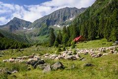 Pastos alpinos imagens de stock royalty free