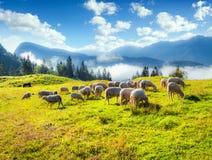 Pastos alpinos em Eslovênia, Julian Alps Fotografia de Stock Royalty Free