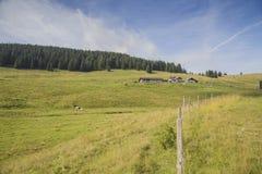 Pastos alpinos no platô de Asiago em Itália imagem de stock royalty free