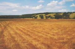 Pastos biselados en un valle montañoso Prados del verano debajo del cielo azul Árboles raros en tierras de labrantío del granjero Fotos de archivo