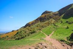 Pastos da montanha com céus azuis Foto de Stock Royalty Free