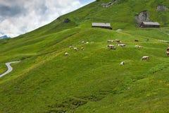 Pastos das montanhas nos alpes Imagem de Stock Royalty Free