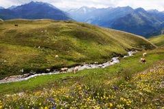 Pastos de la montaña y flores salvajes en Austria Foto de archivo libre de regalías