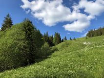Pastos e pastagem alpinos no vale de Wagital ou de Waegital e pelo lago alpino Wagitalersee Waegitalersee, Innerthal fotos de stock