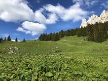 Pastos e pastagem alpinos no vale de Wagital ou de Waegital e pelo lago alpino Wagitalersee Waegitalersee, Innerthal foto de stock