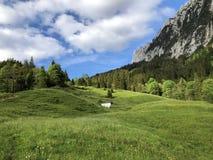 Pastos e pastagem alpinos no vale de Wagital ou de Waegital e pelo lago alpino Wagitalersee Waegitalersee, Innerthal imagens de stock