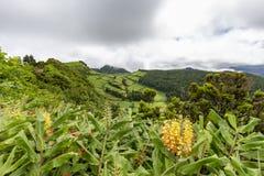 Pastos e plantas tropicais imagens de stock royalty free