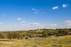 Pastos en Extremadura, España Muchos robles y cielo azul Imágenes de archivo libres de regalías