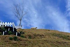 Pastos hermosos del prado Fotos de archivo libres de regalías