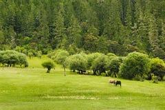 Pastos hermosos del prado del shangri-la imagen de archivo
