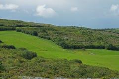 Pastos verdes na Irlanda Imagem de Stock