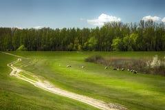 Pastos y bosques en el pueblo de Ivanovo, fotos de archivo