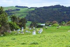 Pastos y colmenas verdes de la abeja Fotos de archivo