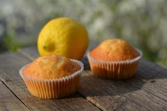 Pastries, lemon muffins on wood table Stock Photos