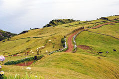 Pastrue krajobraz, Sao Jorge Zdjęcie Stock