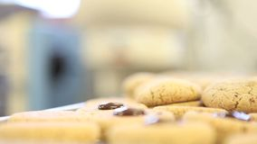 Pastry chef prepare chocolate cookies stock footage