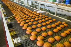 Pastry on conveyor line, food production factory or plant with machinery. Making cookies process.  royalty free stock image