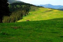 Pasturage горы стоковые изображения rf