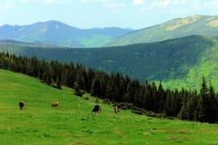 Pasturage горы стоковые фотографии rf